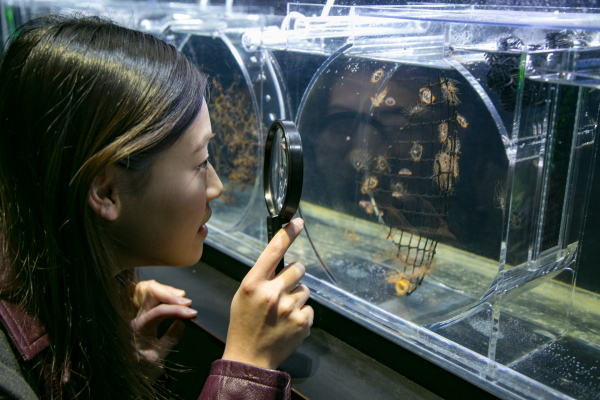 世界一のクラゲ水族館がオモシロイ!Original text