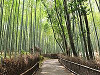 竹林の小径(嵐山)│観光・旅行ガイド - ぐるたび