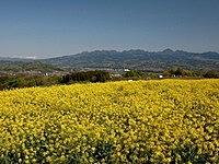 鼻高展望花の丘